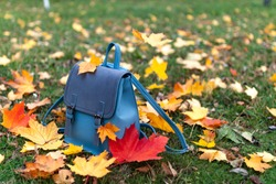 School blue backpack with autumn maple leaves in the park. Beginning of a new academic year. School concept