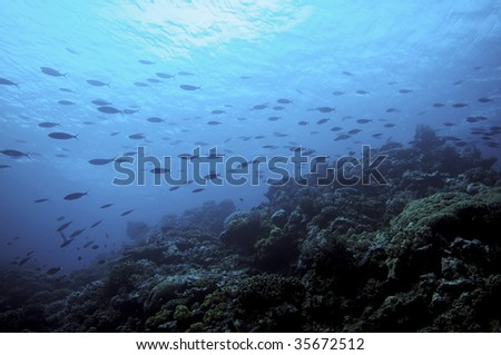 school of fish in the pacific