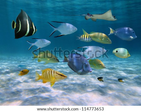 School of fish with ripples of sunlight reflected on sandy ocean floor