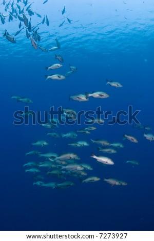 School of tropical fish - stock photo