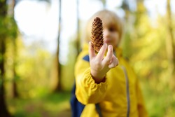 Schoolchild with backpack is hiking and exploring nature in the forest. Little boy travel in the sunny woodland. Child examines a fir cone. Autumn vacation for inquisitive kids in forest. Boy-scout.