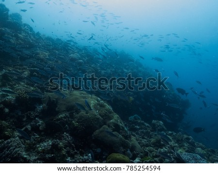 schools of fish on the reef #785254594