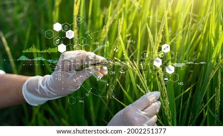 Science of plant research, Chromosome DNA and genetic, Development of rice varieties, Scientist researching and experiments genetic of rice with record data in the fields.