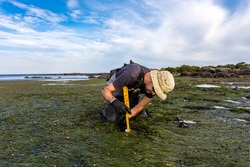 Scientist collecting a sediment core to asses carbon sequestration rates in the sediment of a tidal seagrass bed.