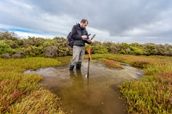 Scientist downloading water level logger data in a coastal wetland to understand inundation period and impact on ecosystem services.