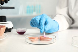 Scientist inspecting meat at table in laboratory, closeup. Poison detection