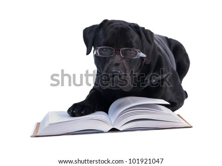 Scientist Labrador
