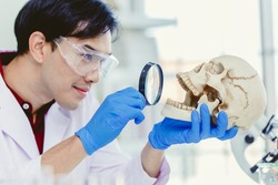 Scientist Physical anthropology in biological science lab studying human bone looking with Magnifying glass in skull to study mount and teeth age of ancient people