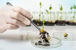 Scientist testing GMO plant in laboratory - biotechnology and GMO concept