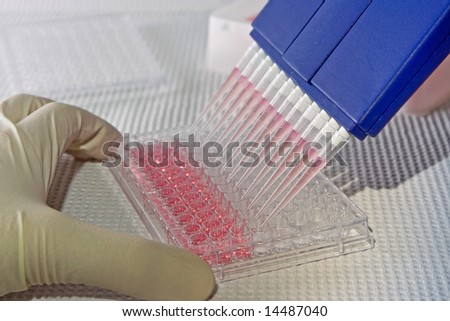 Scientist using blue multi-channel pipet for pipetting a 96 well plate with pink solution on white