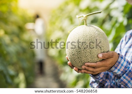 Shutterstock Scientist woman check melon quality in greenhouse