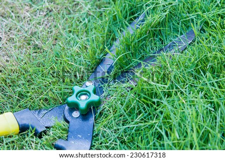 Scissors cut grass put in garden during cut #230617318