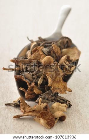 Scoopful of dried mushrooms