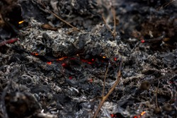 scorched earth, burnt grass close-up, smoldering ash from a fire