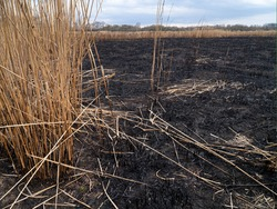 Scorched earth, spring fires. A field with burnt grass. The destruction of insects.