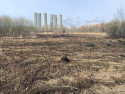scorched field and high-rise buildings in the background