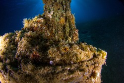 Scorpion fish on the artificial reef. Wide angle underwater photography. Underwater landscape and scenery. Red Sea. Dahab, Egypt.