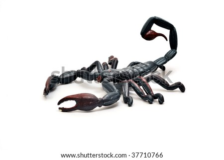 Scorpion plastic toy isolated on white background