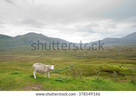 Scotland land, sheep #378549166