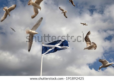 Scottish flag with Seagulls