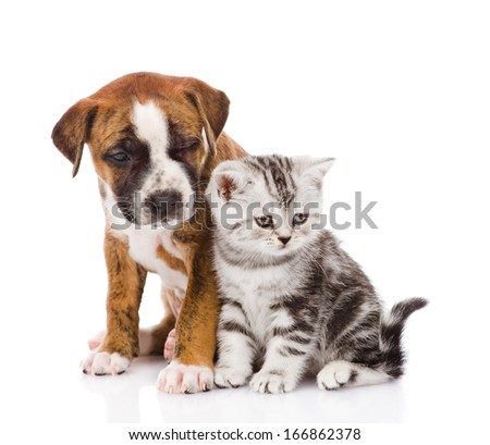 Scottish kitten and puppy looking away isolated on white background