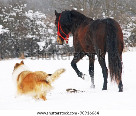Scottish shepherd and horse on snow