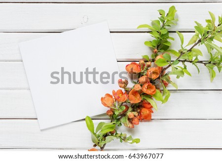 Scrapbook page of wedding or family photo album, frame with red  Chaenomeles japonica flowers and green leaves on white wooden background; top view, flat lay, overhead view