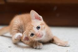 Scratching kitten.