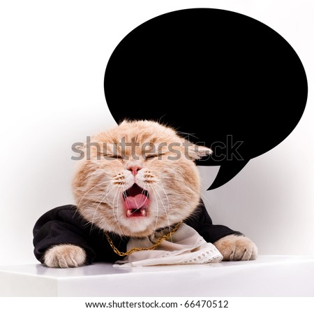 screaming cat in dress clothes on a light background.place for text. new year.