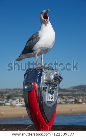 screaming seagull at the beach