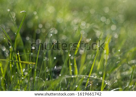 Photo of  Screensaver of green grass with bokeh