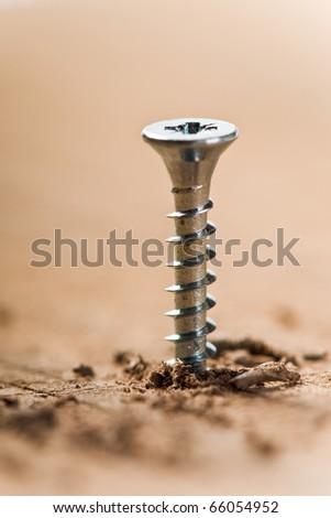 screw screwed in wood with wood shavings