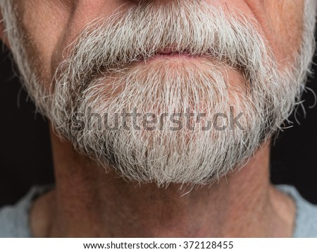 Scruffy grey beard on senior male with mustache growing over lips. #372128455