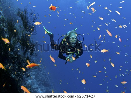 scuba diver and colorful fish