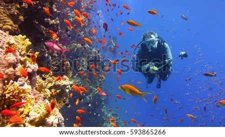Scuba diver and coral reef with fish #593865266