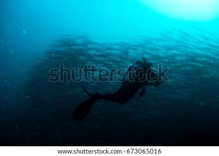 scuba diver and school of barracuda in stream of plankton #673065016
