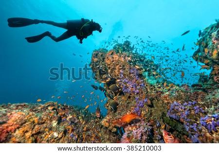 Scuba diver explore a coral reef #385210003