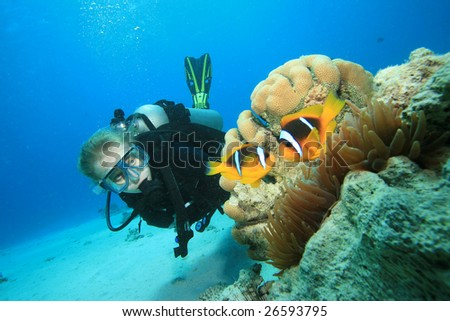 Scuba Diver finds Nemo