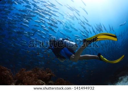 Scuba diver finning towards school of Jack fish in a tropical sea Foto d'archivio ©