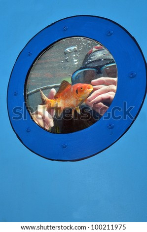 Scuba diver is diving in a water tank with goldfish.