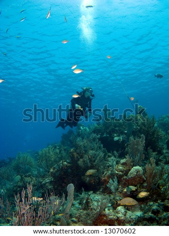 Scuba Diver looking upward while diving in Cayman Brac