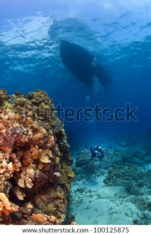 Scuba Diver next to a Coral Wall under the boat - stock photo