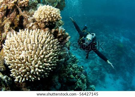 scuba diver on drift dive