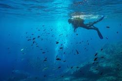 Scuba diver on water surface look at shoal of fish underwater, Mediterranean sea, Medes Islands, Costa Brava, Spain