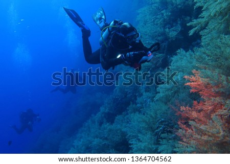 Scuba diver photographer with camera and light on the coral reef.  Divers swimming in the blue ocean. Underwater photography, explorers on the reef. #1364704562