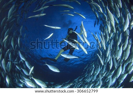 Scuba diver surrounded by fish #306652799