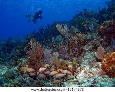 Scuba Diver swimming along a Cayman Island Reef