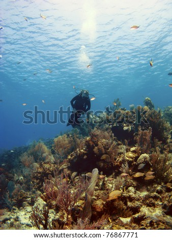 Scuba Diver Swimming over a Cayman Island Reef