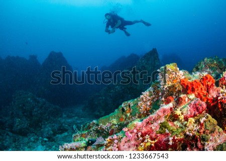 SCUBA diver swimming over colorful soft corals on a tropical reef at Koh Bon, Thailand #1233667543