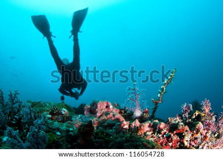 Scuba diver swimmming over reef